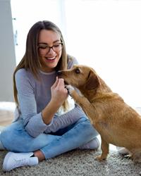 Dog sitter expérimenté