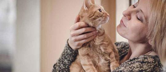 À qui s'adresser pour adopter un chat
