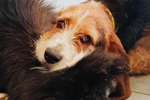 Pension canine familiale à champigny