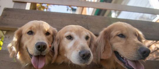 une pension canine